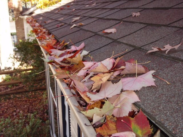 leaves - in - gutter